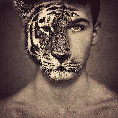 Face de tigre.
