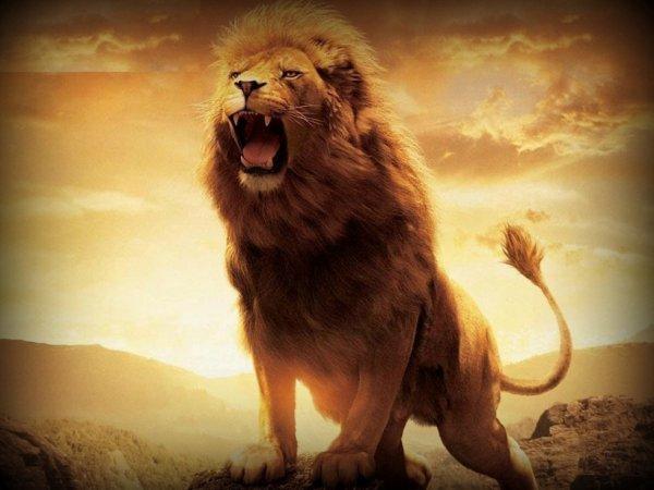 je serais roi