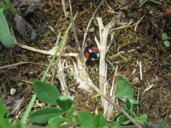 insecte chapitre 2 numero 6