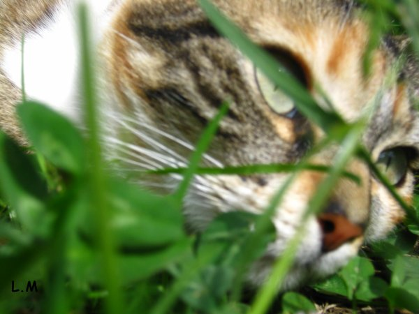 photographie the cats