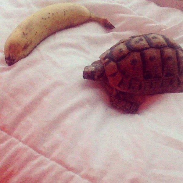Banane or tortue ? I prefere banane i prefere banane ! Mdrrrrrrrrrr <3 mariionnnnnn