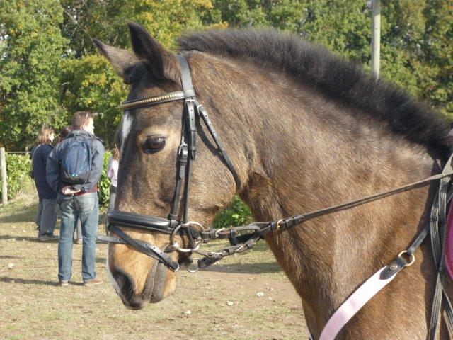Se fondre dans son cheval, ne faire qu'un, jusqu'à sentir en soit le sol au bout de ses pieds.