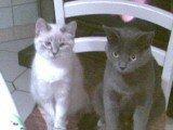 Rosabelle et Nounoutte ♥
