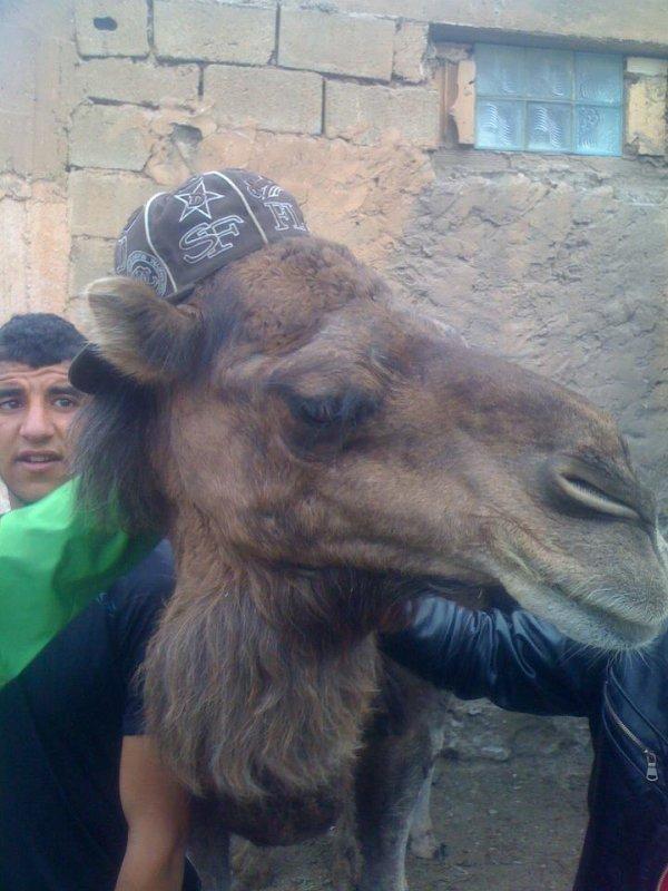 le swag  chez les animaux en 2013