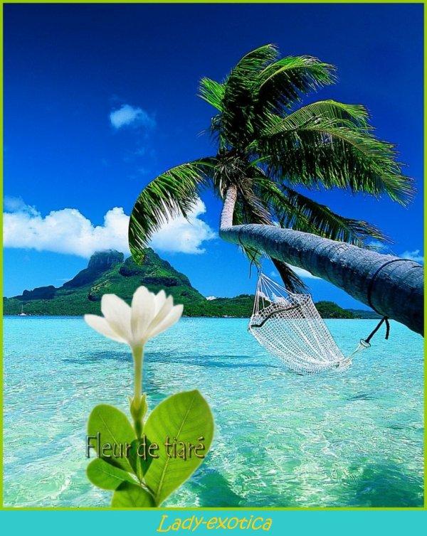 La fleur reine des îles polynésiennes