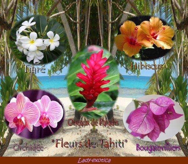Quelques fleurs.. De Mon paradis