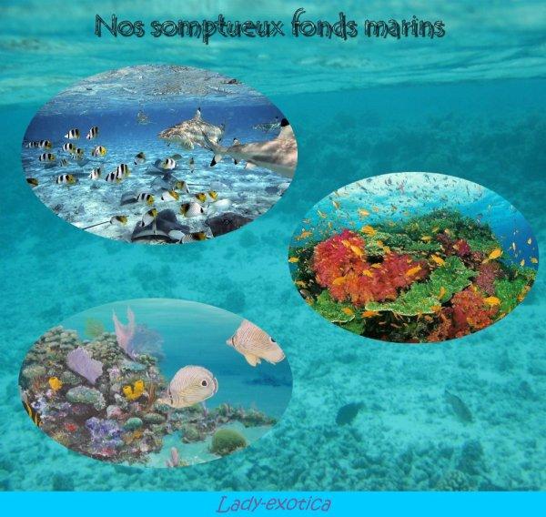 La richesse des fonds sous-marins
