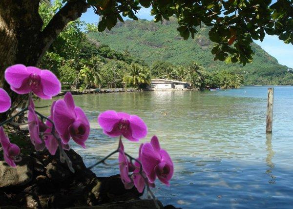 La Polynésie - Sensuelle et captivante