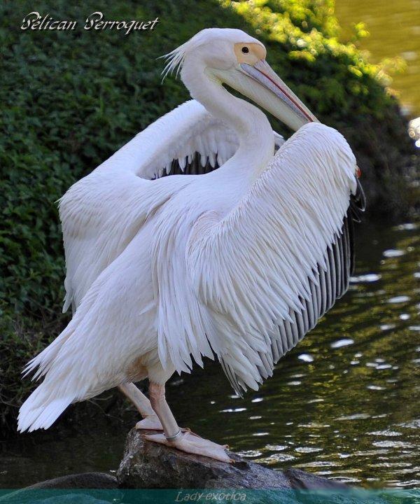 Oiseaux  d'un Paradis celui De Nouméa