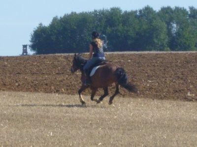 Matinée dans les champs, stage cross ; Amélie & Promesse (: ♥