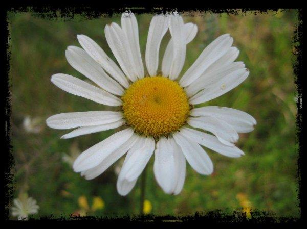 Fleurs en tout genre.......