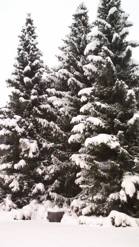 Et  un peu de Neige!! enfin..