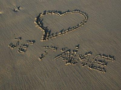 je t ' aime mon coeur (l)