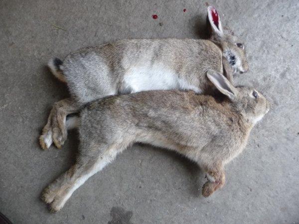 et 2 lapins