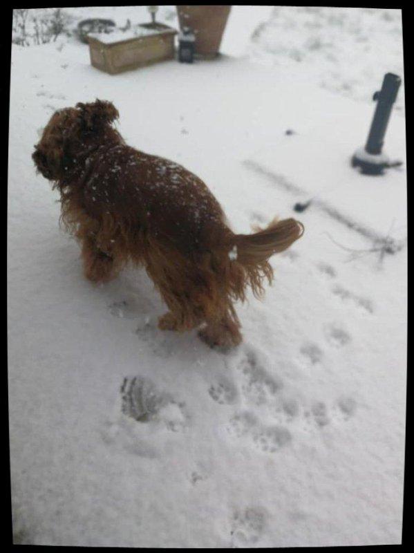 Cana et Gofer sous la neige