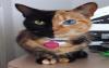 Chat à deux couleurs
