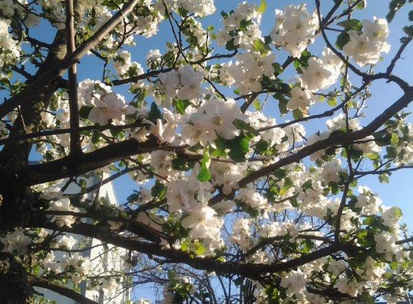 le printemps...