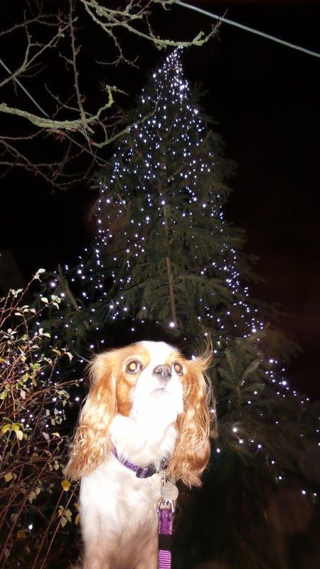 Décos de Noël au Rheu :)