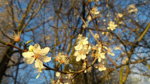 Le début du printemps en avance !