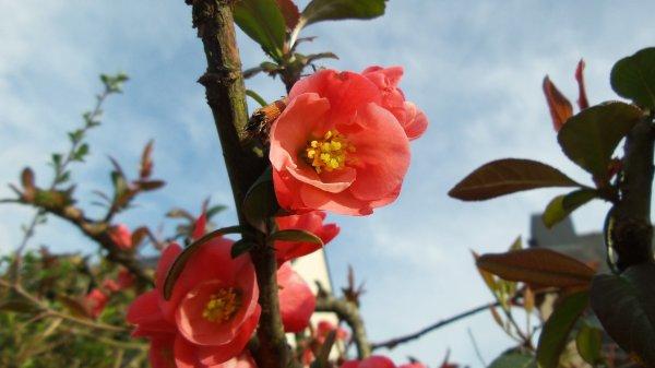 De jolies fleurs... et la plus belle !