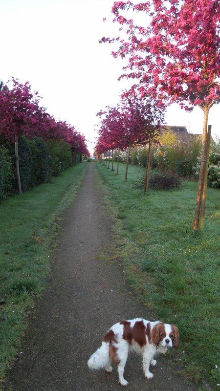 Promenade le matin avant le travail... quand on ne va pas dans les champs se tremper les pieds !