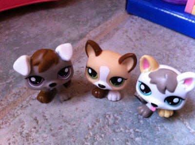 Mes trois nouveaux petshop les triplés chiots