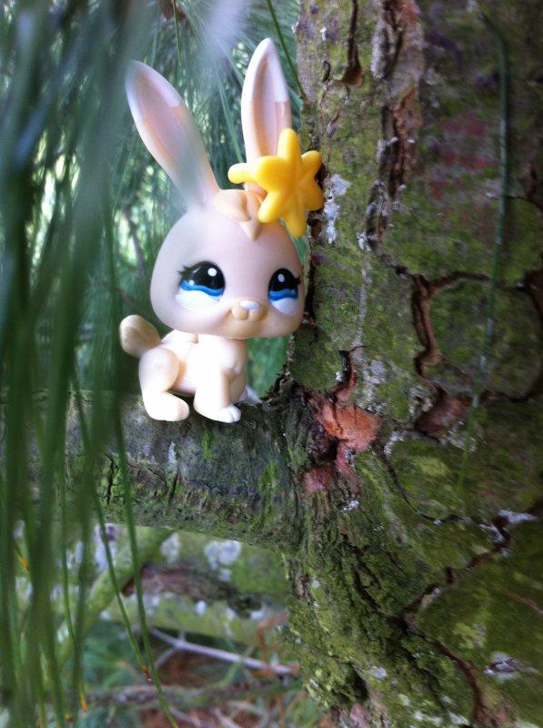 cannelle sur un arbre