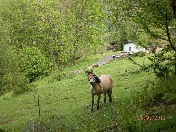 Saillies 2012, Vahinée vient rendre visite à Gidar van den Bosdries et Béa à Lora