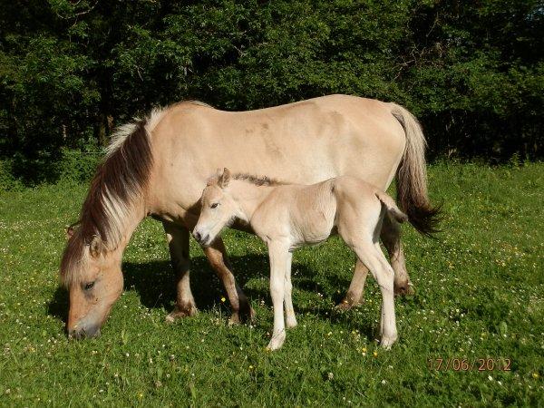 Naissance 2012, Netsina au Bois le Miot est née le 17 juin 2012 par Lora L-196 et Ubuki du Val de Lienne.