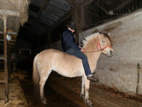 """Gilde, jument de 2010 classe """"A"""" par Reitze, pleine de Gidar van den Bosdries pour 2014."""