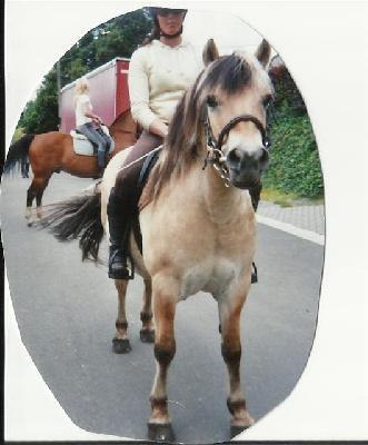 Ayrton de la Cour des Cerfs, puissant hongre de 1999 par Norulf.