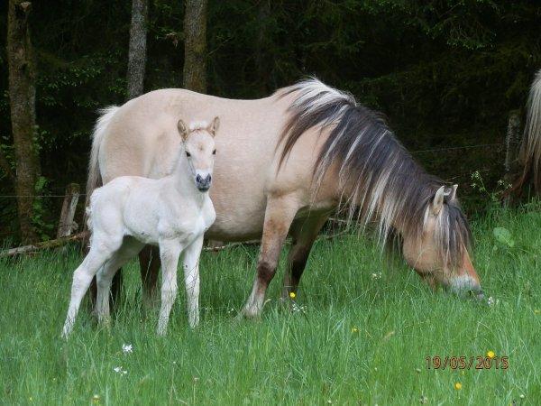 Naissance mai 2015, Zéna et Rivière-Ginger, par Gidar, née le 17 mai !