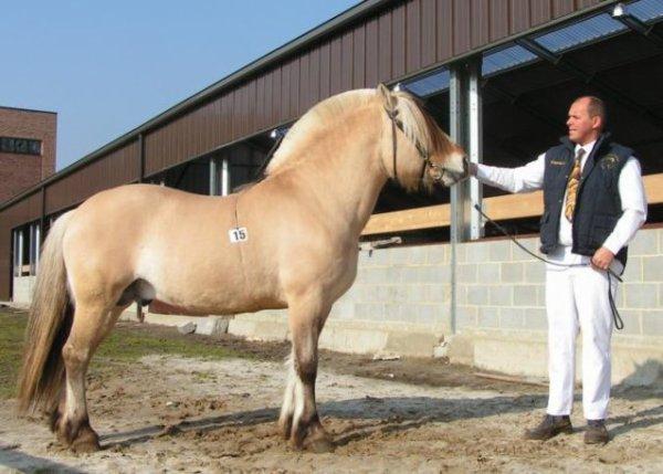 Heia-Gutt, étalon norvégien agréé à vie à la saillie, pour 2018 à 200 ¤uros.