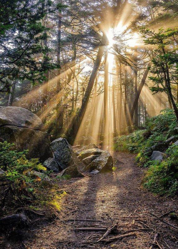 forêt...