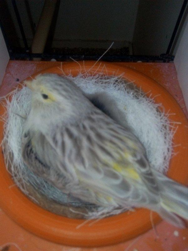 La femelle vet son premier petit