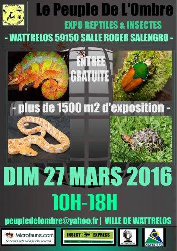 Exposition de Reptiles et Insectes
