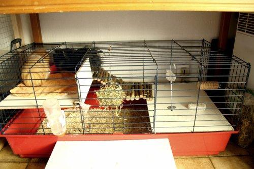 eliot la vie de mes animaux lapins chat rats et. Black Bedroom Furniture Sets. Home Design Ideas