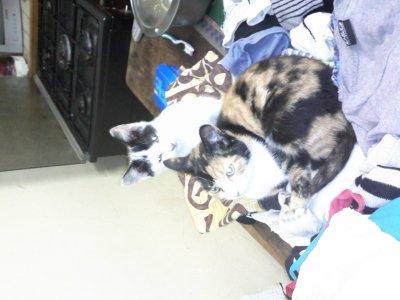 mes chat je vous hador