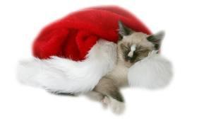 bientot noel pour les chat ! lol