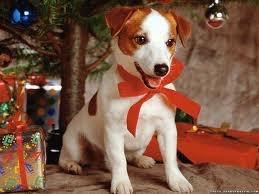 un noel de chien mdr ! :)