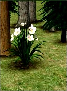 _____» ARTICLE SELECTIONS : Objets / Extérieur / Plantes - Fleurs____________-__________LIVRE D'OR  - AMIS  - FAVORIS_ A4S_Ta source n°1 de téléchargements Sims 2___________________________NEWSLETTER DU BLOG - SOMMAIRE - FORUM A4S