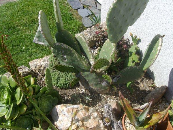 """""""Vieux cactus figé depuis toujours""""... se réveille, il lui pousse des oreilles !"""
