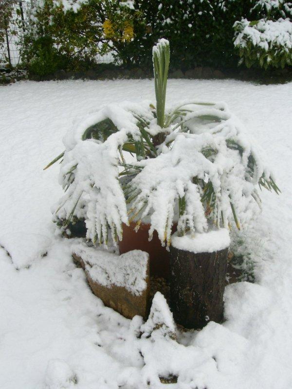 Pauvre palmier !