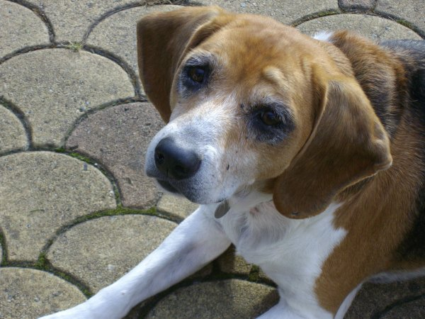 Un sujet toujours tabou : la mort d'un chien ...