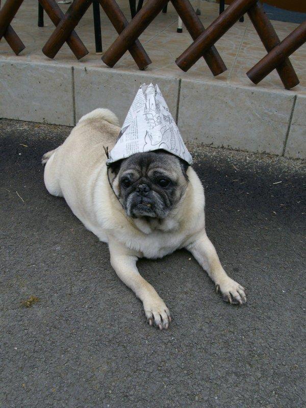 Un bon chien : Guizmo, dit MOMO !!!!