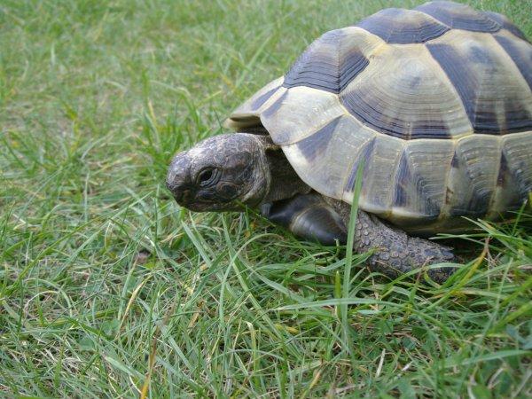 Le lièvre et la tortue !