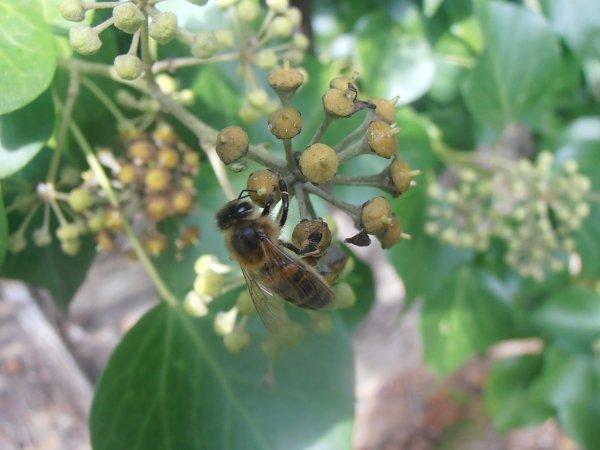 Miam-miam, le repas des insectes ....