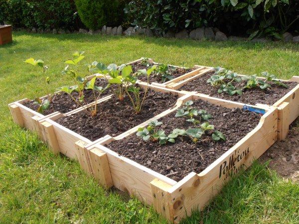 carré de fraisiers ... (recyclage de caisses à saucissons ! )