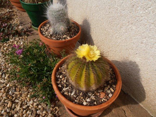 Cactus de l'été dernier