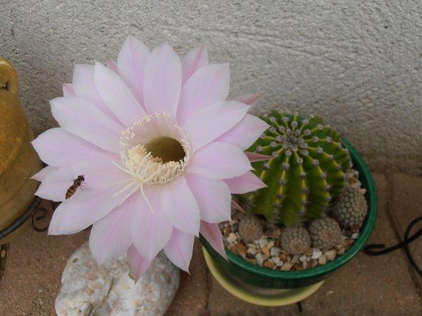 Fleur de Cactus et ses visiteurs : racontez-moi leur histoire....